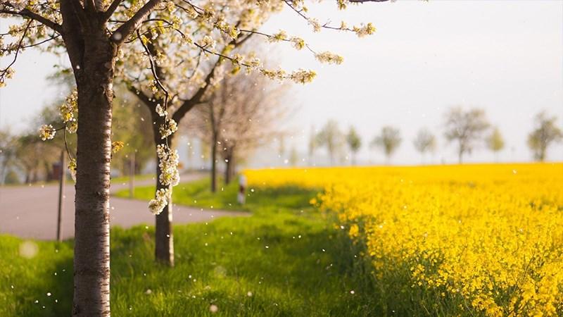 Hình nền vườn hoa tươi đẹp mùa xuân - 1 (Kích thước: 1920 x 1080)