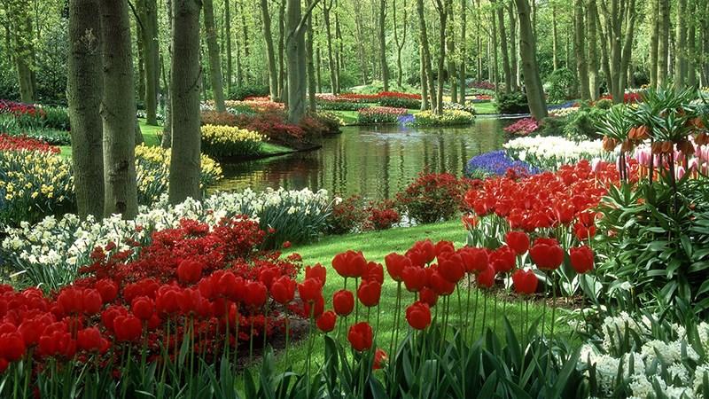 Hình nền vườn hoa tươi đẹp mùa xuân - 2 (Kích thước: 1920 x 1080)