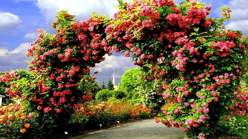 Hình nền vườn hoa tươi đẹp mùa xuân - 5 (Kích thước: 1920 x 1080)