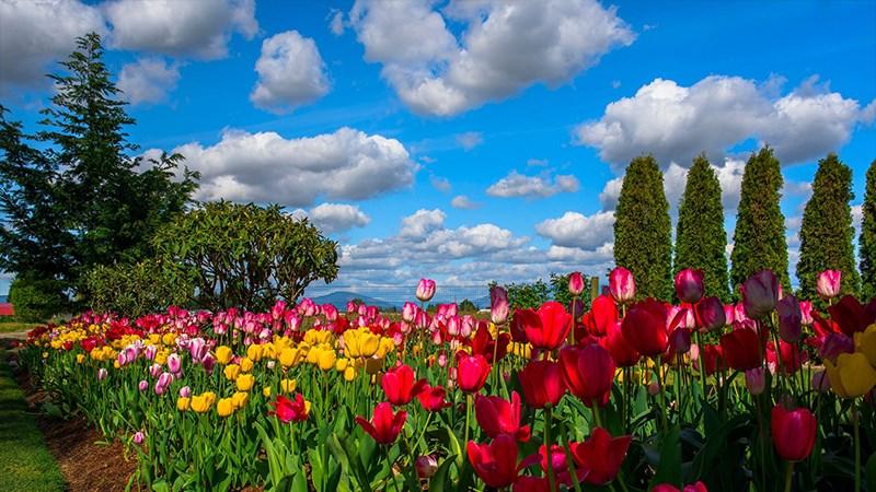 Hình nền vườn hoa tươi đẹp mùa xuân - 6 (Kích thước: 1920 x 1080)