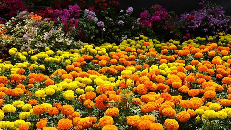 Hình nền vườn hoa tươi đẹp mùa xuân - 7 (Kích thước: 1920 x 1080)