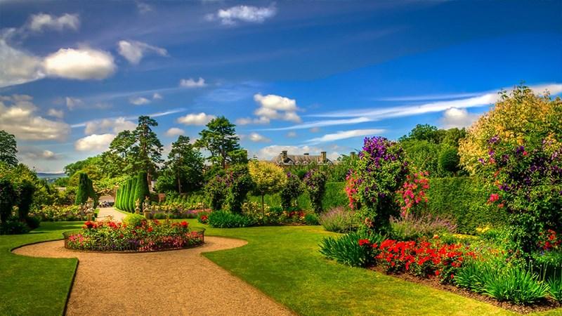 Hình nền vườn hoa tươi đẹp mùa xuân - 9 (Kích thước: 1920 x 1080)