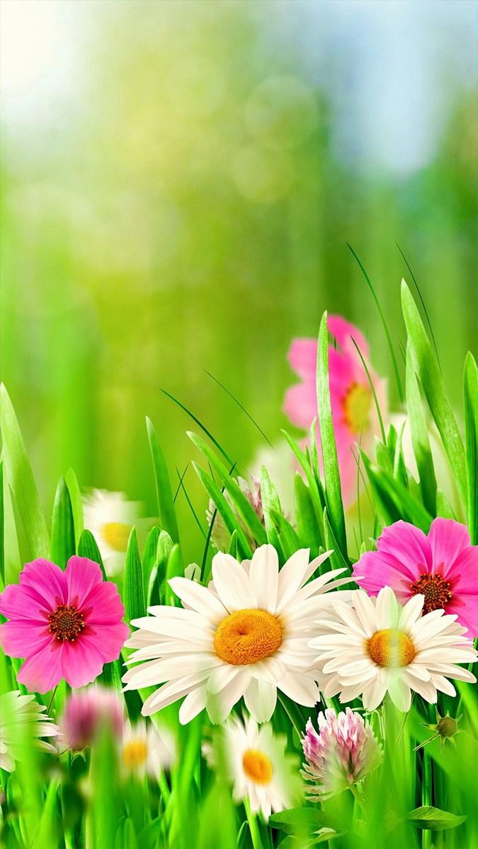 Hình nền mùa xuân cho điện thoại - 5 (Kích thước: 1080 x 1920)