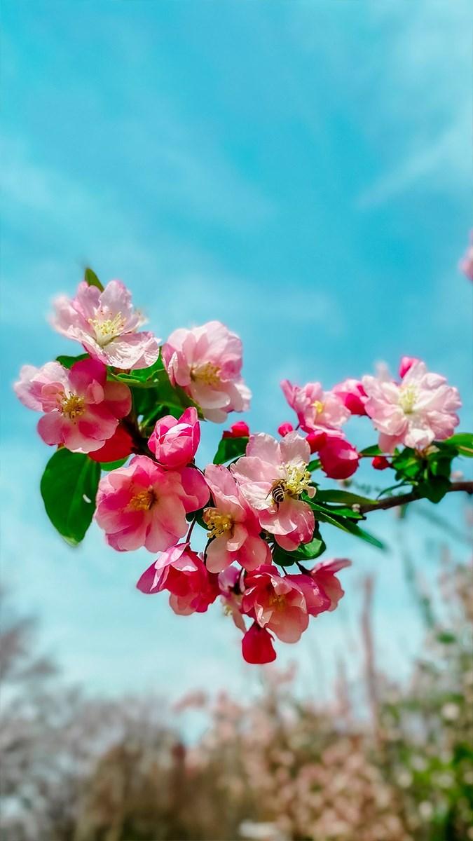 Hình nền mùa xuân cho điện thoại - 7 (Kích thước: 1080 x 1920)