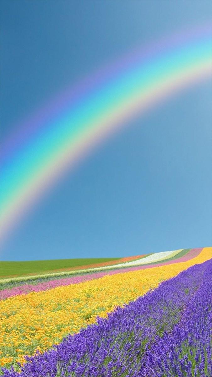 Hình nền mùa xuân cho điện thoại - 9 (Kích thước: 1080 x 1920)