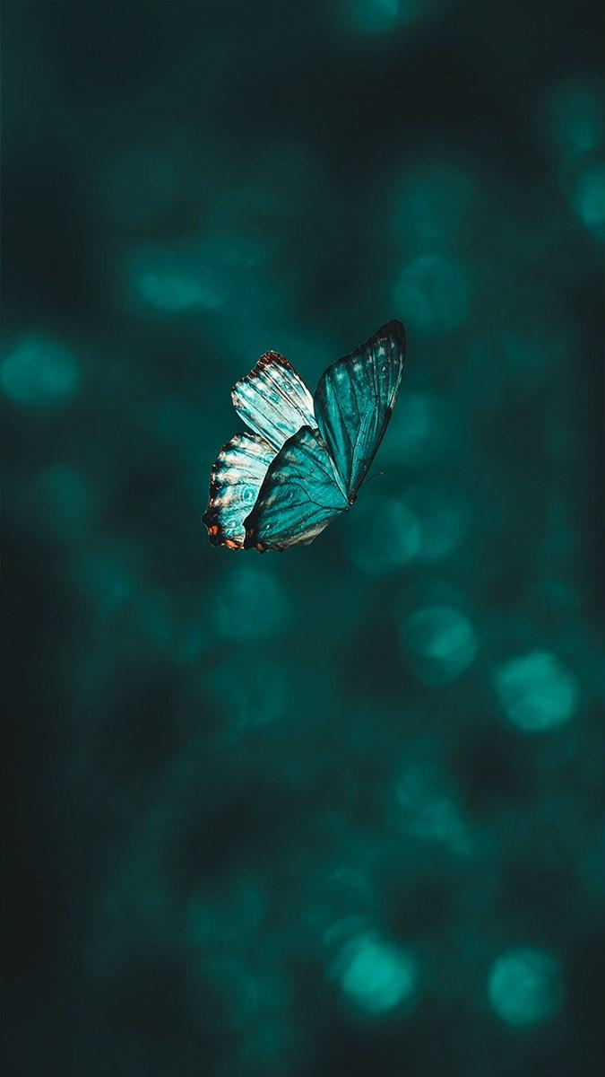 Hình nền bươm bướm - 1 (Kích thước: 1080 x 1920)