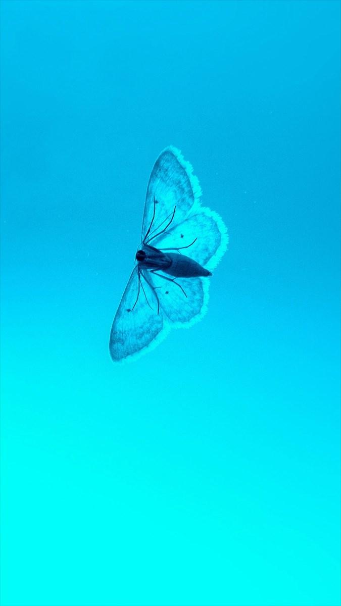 Hình nền bươm bướm - 10 (Kích thước: 1080 x 1920)