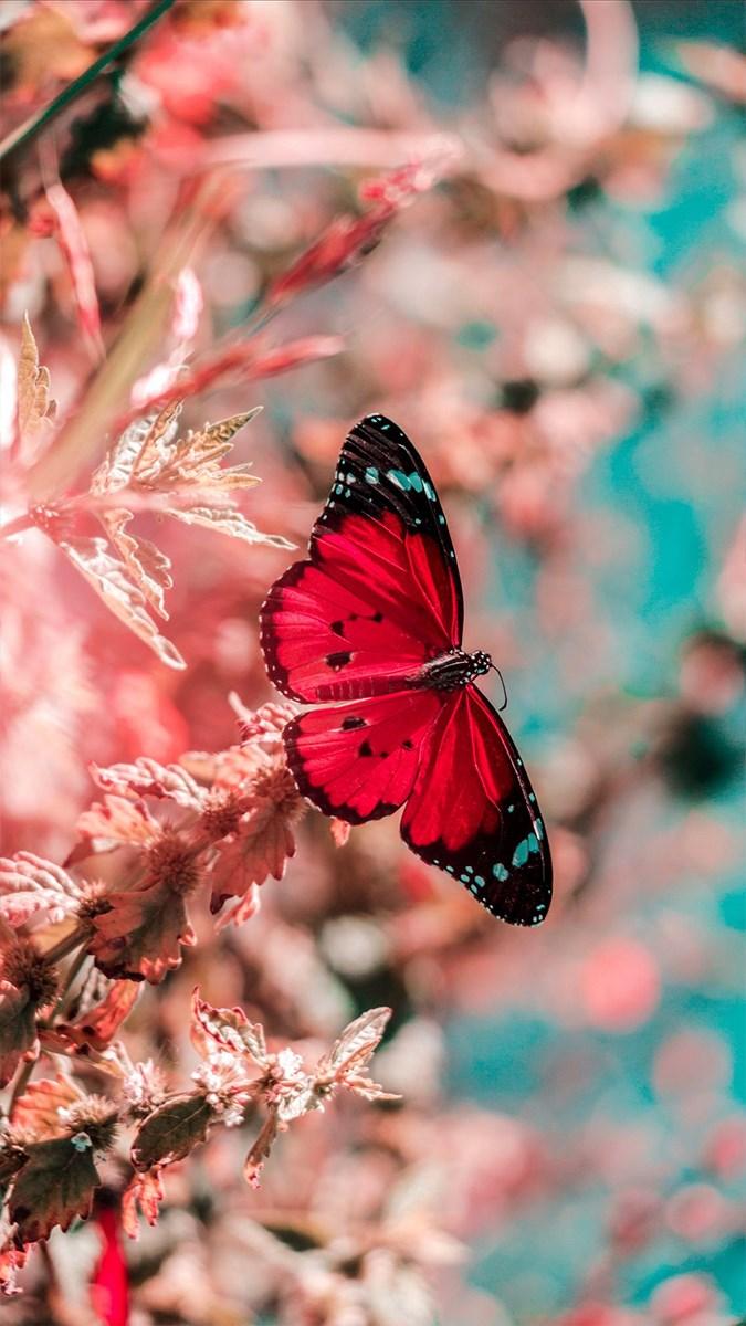 Hình nền bươm bướm - 16 (Kích thước: 1080 x 1920)