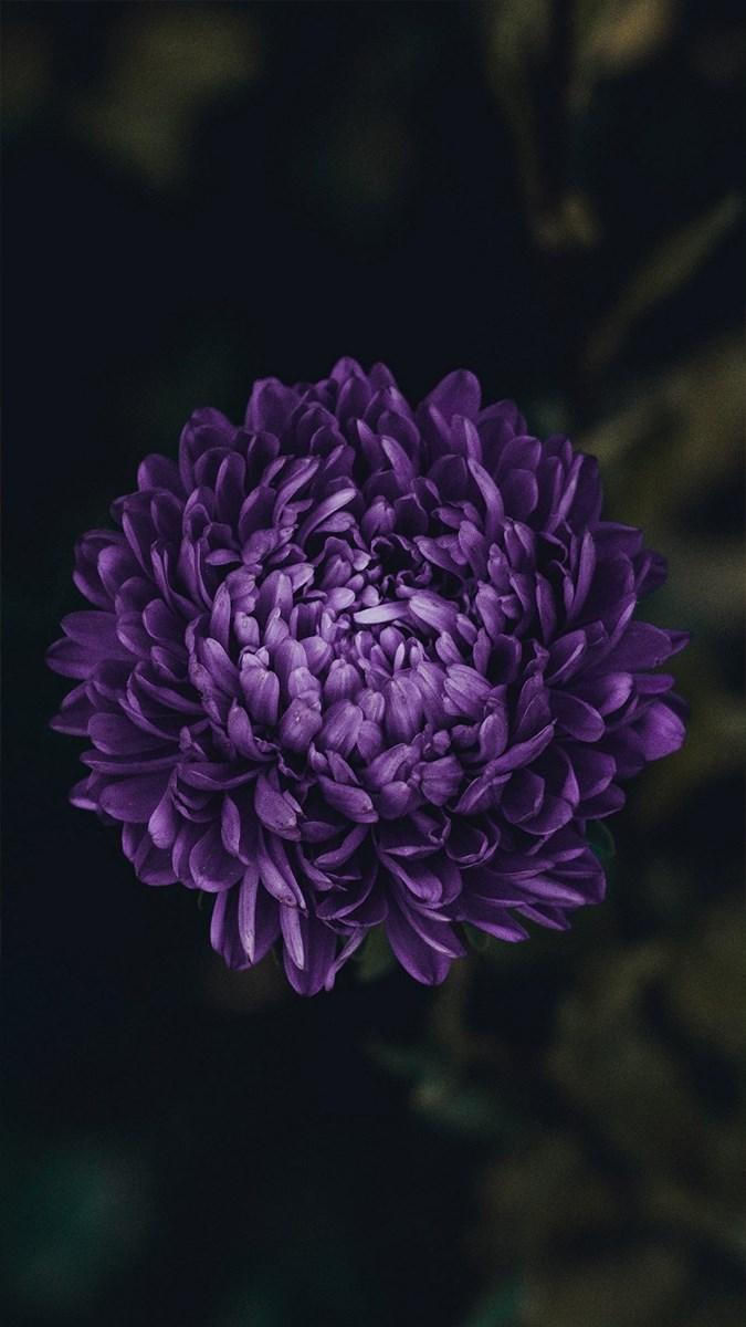 Hình nền hoa cho điện thoại - 20 (Kích thước: 1080 x 1920)