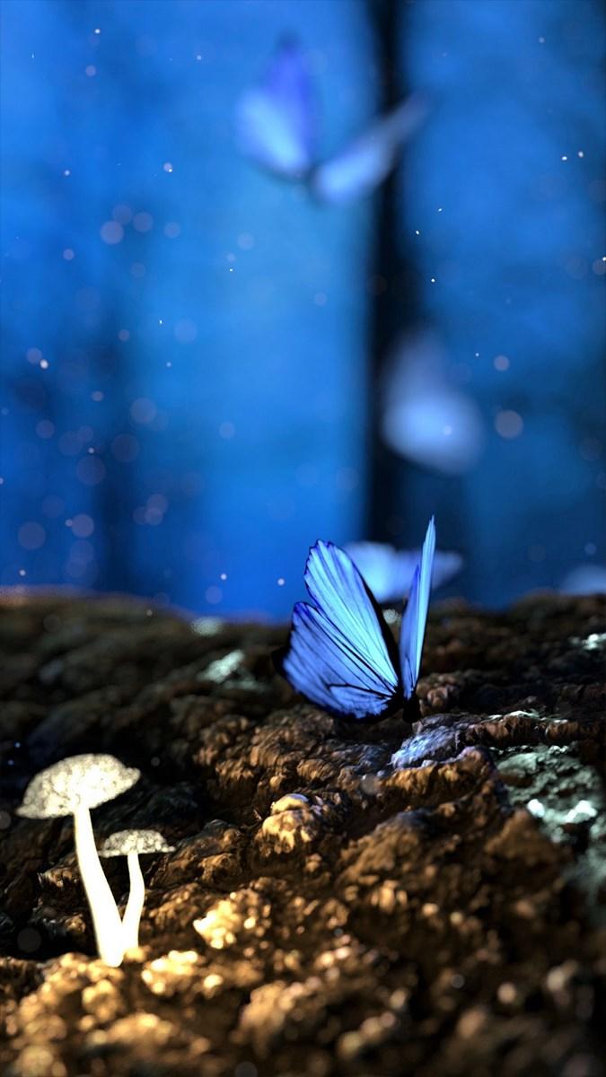 Hình nền bươm bướm - 20 (Kích thước: 1080 x 1920)