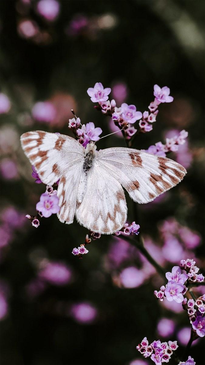 Hình nền bươm bướm - 3 (Kích thước: 1080 x 1920)