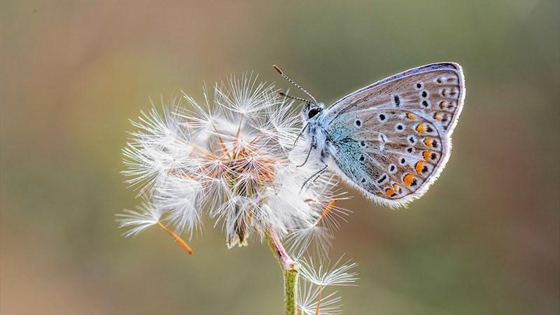 Hình nền bươm bướm - 10 (Kích thước: 1920 x 1080)