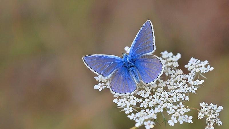 Hình nền bươm bướm - 18 (Kích thước: 1920 x 1080)