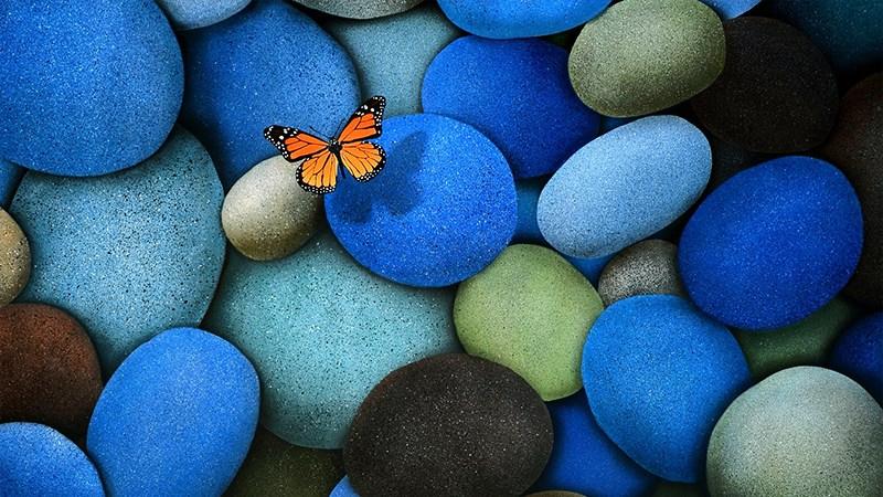 Hình nền bươm bướm - 20 (Kích thước: 1920 x 1080)