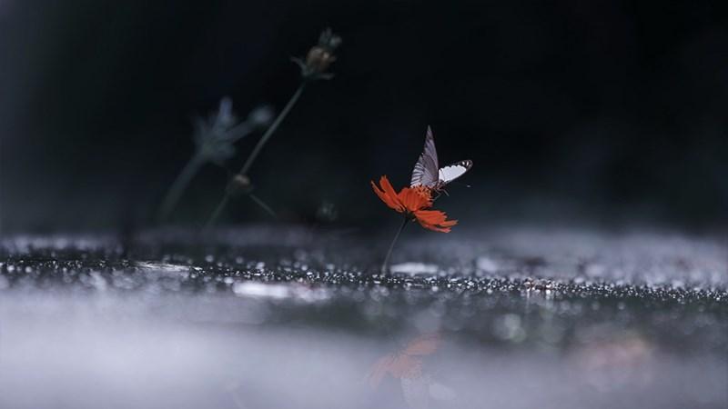 Hình nền bươm bướm - 9 (Kích thước: 1920 x 1080)