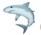 Cá mập