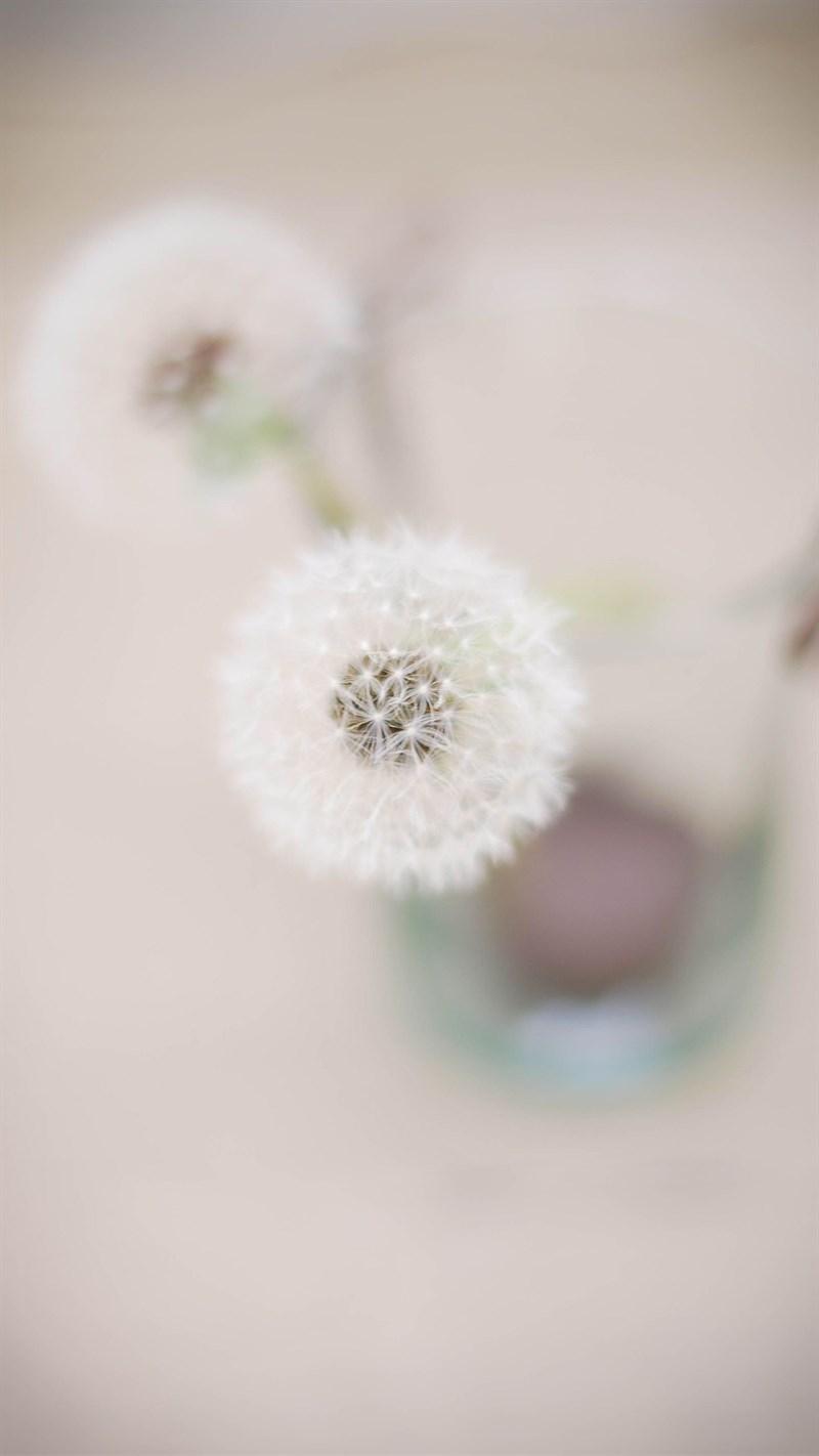 Ảnh hoa bồ công anh - 6 (Kích thước: 1080 x 1920)