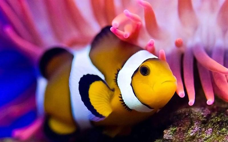 Ảnh cá hề siêu đáng yêu