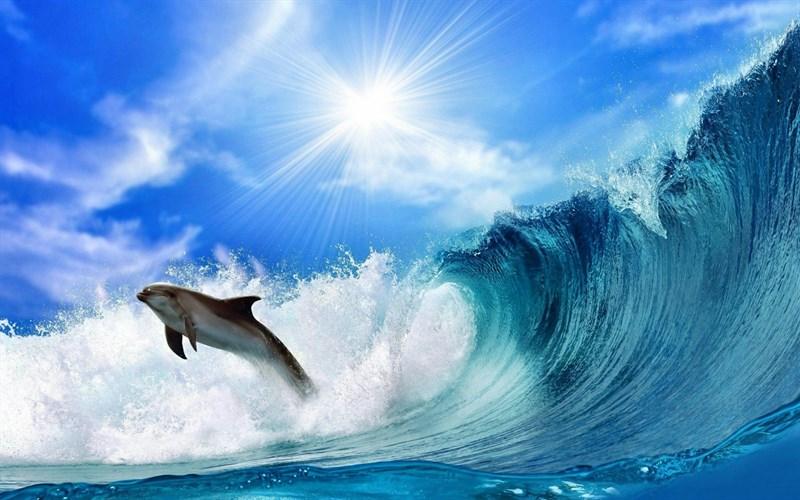 Ảnh cá heo đang tung bay qua các đợt sóng