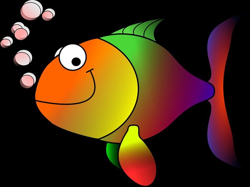 Cá hoạt hình nhiều màu sắc