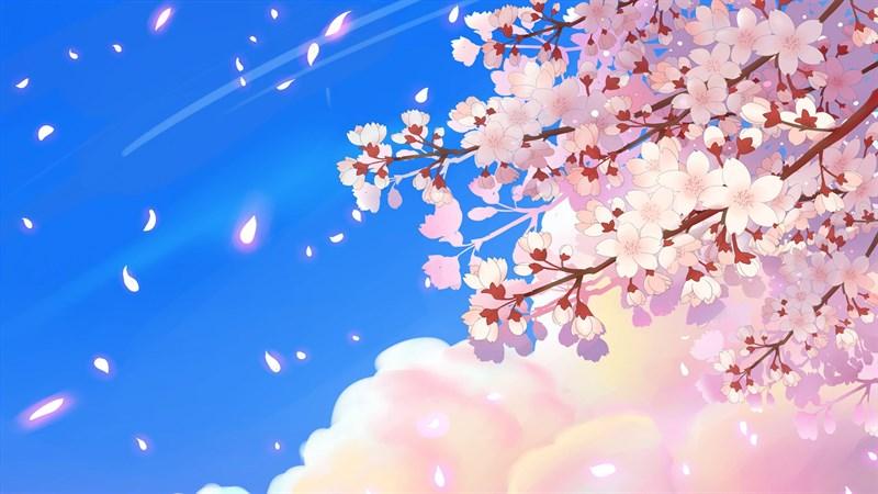 Ảnh nền hoa anh đào trong anime - 1 (Kích thước: 1920 x 1080)