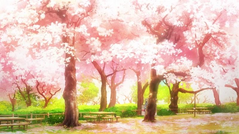 Ảnh nền hoa anh đào trong anime - 5 (Kích thước: 1920 x 1080)
