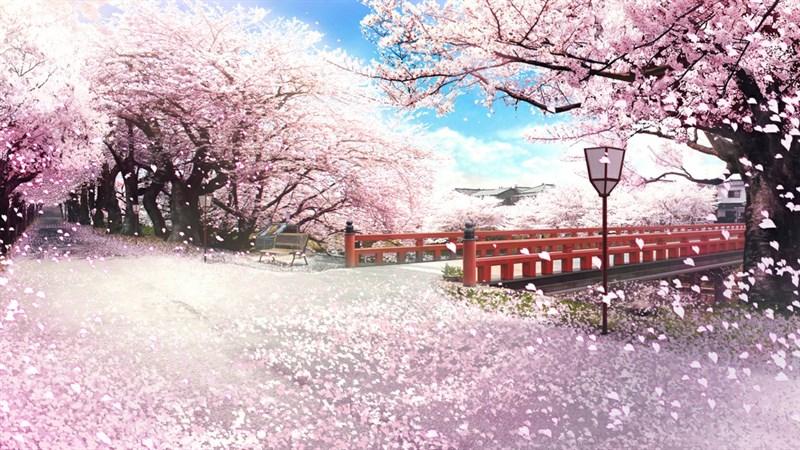 Ảnh nền hoa anh đào trong anime - 8 (Kích thước: 1920 x 1080)