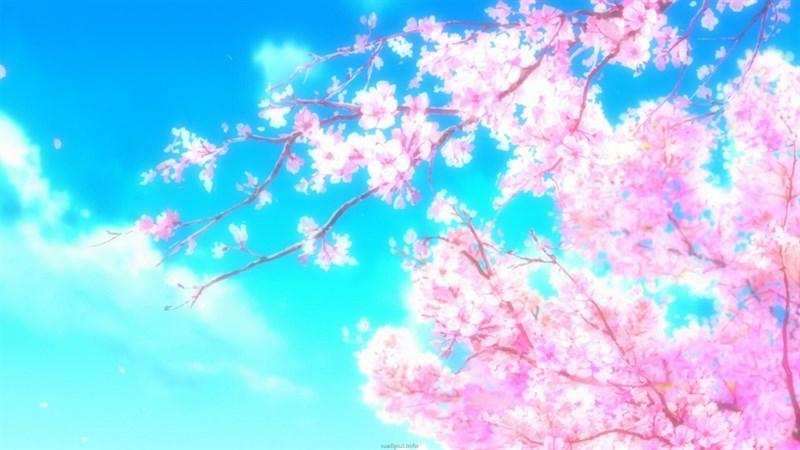 Ảnh nền hoa anh đào trong anime - 10 (Kích thước: 1920 x 1080)