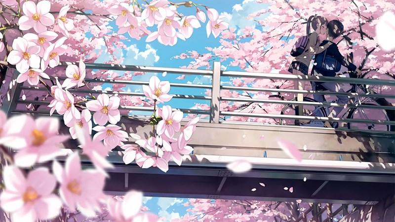 Ảnh nền hoa anh đào trong anime - 11 (Kích thước: 1920 x 1080)