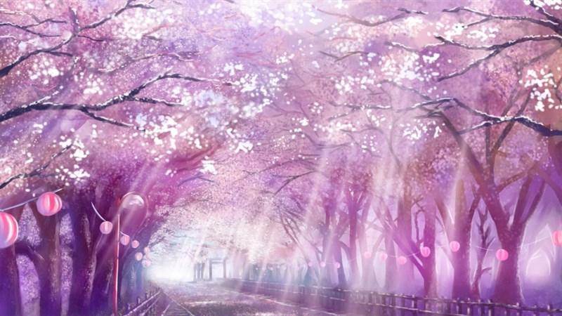 Ảnh nền hoa anh đào trong anime - 13 (Kích thước: 1920 x 1080)