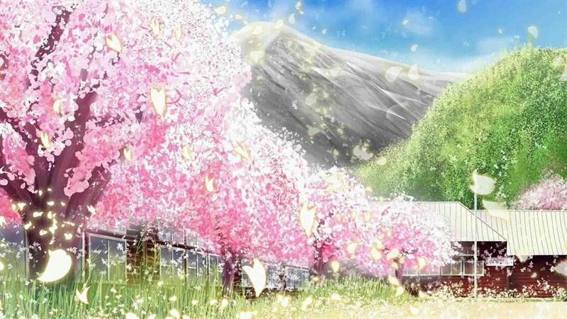 Ảnh nền hoa anh đào trong anime - 14 (Kích thước: 1920 x 1080)