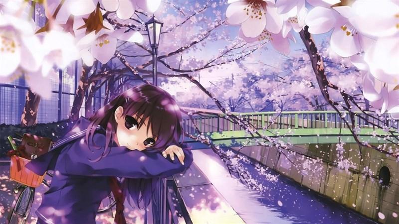 Ảnh nền hoa anh đào trong anime - 15 (Kích thước: 1920 x 1080)