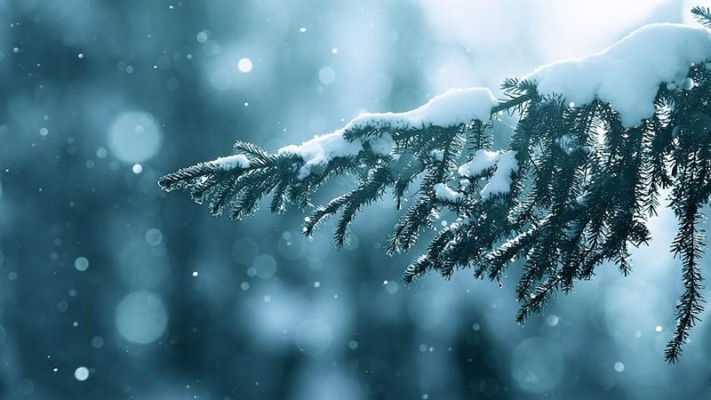 Hình nền bông tuyết, tuyết mùa đông 1 (Kích thước: 1920 x 1080)