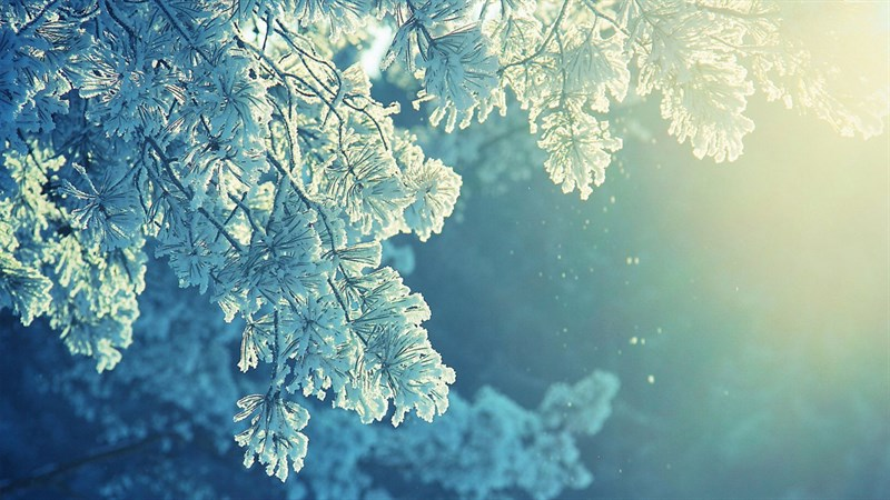 Hình nền bông tuyết, tuyết mùa đông 5 (Kích thước: 1920 x 1080)