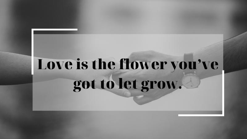 Tình yêu là một bông hoa mà bạn phải chăm sóc để cho nó lớn dần.