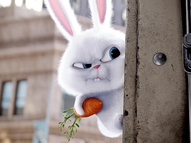 Chú thỏ Snowball không thực sự đáng yêu như vẻ ngoài