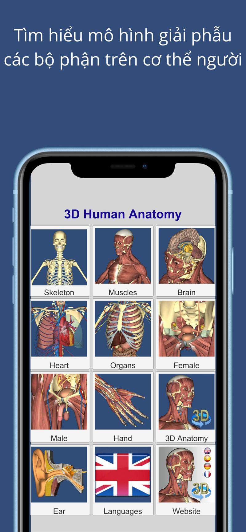Tìm hiểu mô hình giải phẫu các bộ phận trên cơ thể người