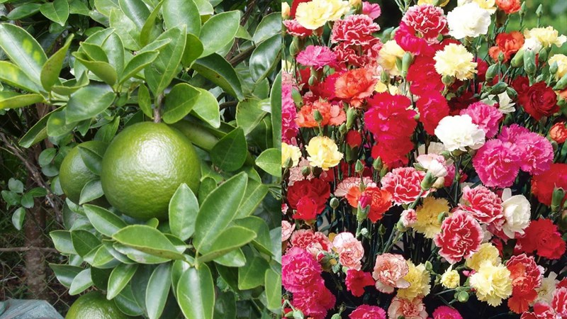 Nguyên liệu thực hiện trang trí dĩa trái cây