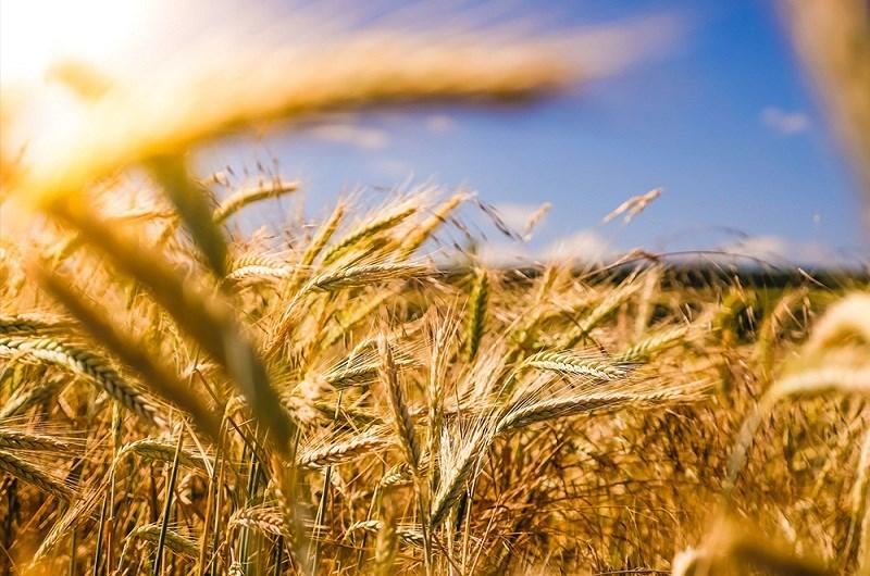 Sự khác nhau giữa bột mì nguyên cám và bột mì thường