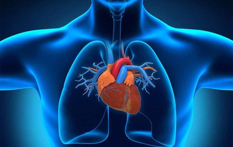 Trà hoa nhài hỗ trợ sức khỏe tim mạch