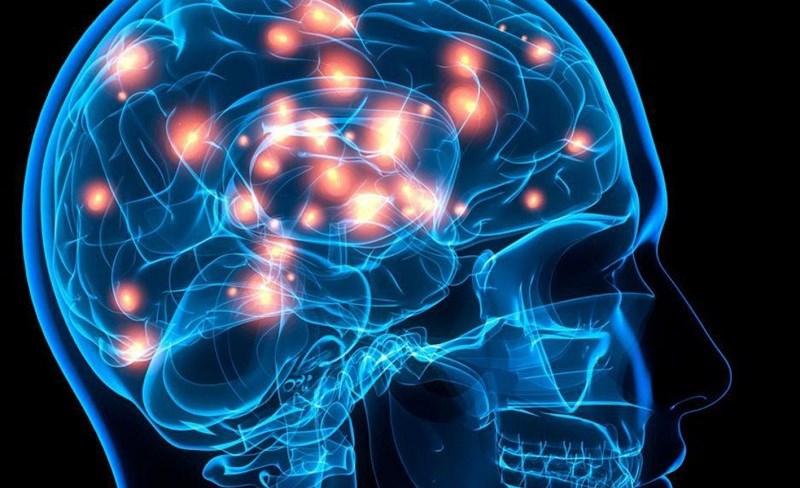 Cà tím giúp tăng cường chức năng trí não