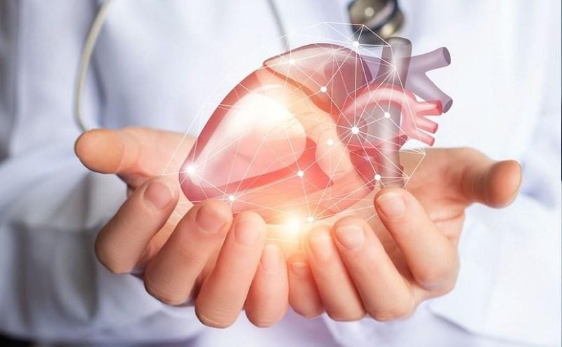 Bắp cải tăng cường sức khỏe tim mạch