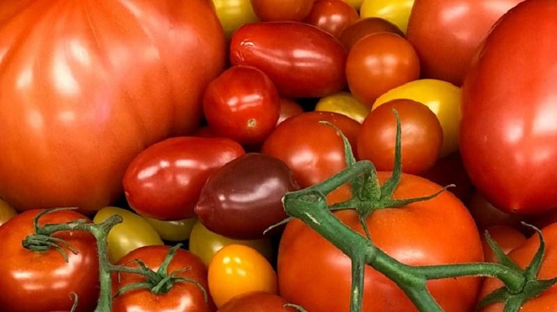 Nguồn gốc của cà chua