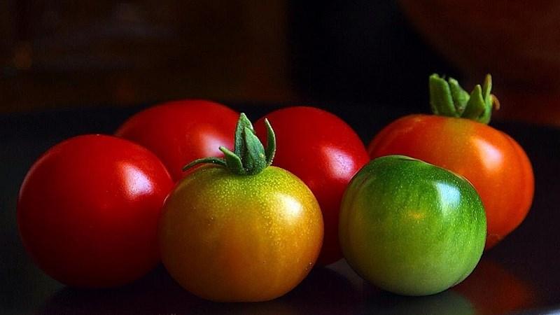 Đặc điểm của trái cà chua