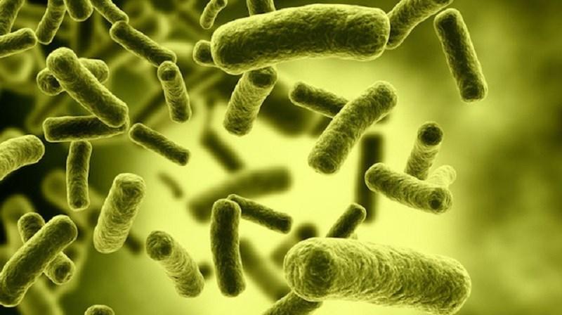 Nguyên nhân làm thực phẩm đóng hộp bị nhiễm khuẩn