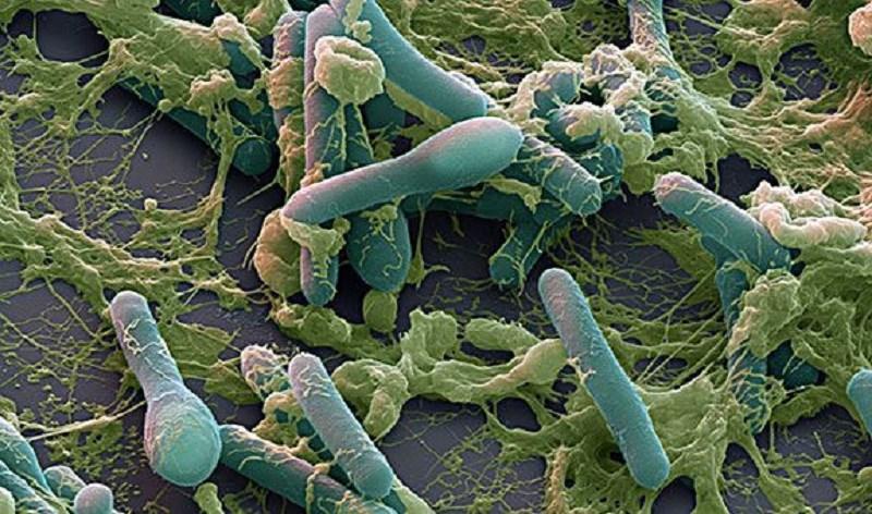 Clostridium botulinum ẩn nắp trong thực phẩm gây ngộ độc