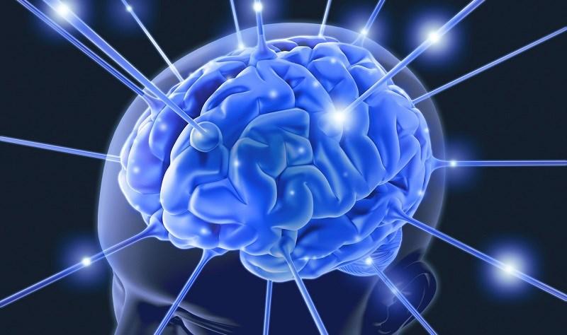 Bí đao hỗ trợ cải thiện nhận thức