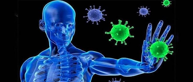 Tác dụng bí đao trong tăng cường hệ miễn dịch