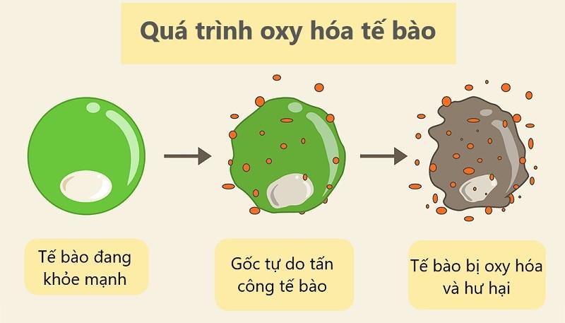 Đinh hương chứa nhiều chất chống oxy hóa