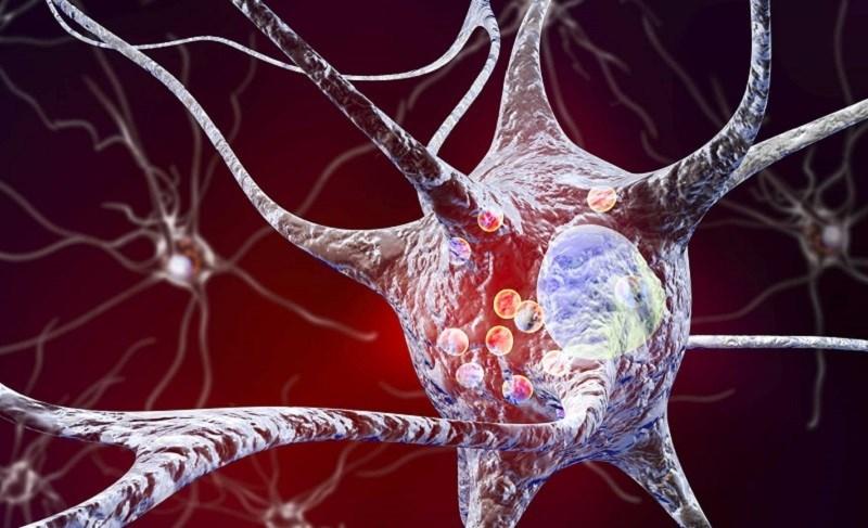 Kỷ tử tăng cường hệ miễn dịch